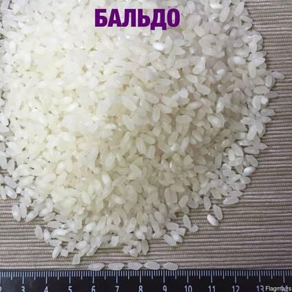 Medium grain elite rice, Camolino, other grains