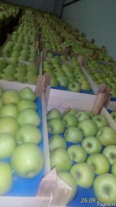 Продаю яблоки оптом!