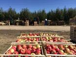 Vegetables Fruits from Kazakhstan - photo 1