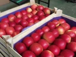 Яблоки из Польши! Apples from Poland! - фото 6