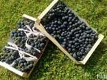 Фрукты Сербия- виноград груша яблоко - фото 1