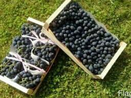 Фрукты Сербия- виноград груша яблоко