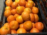 Greek mandarin - photo 1