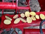 Картофель 5 - фото 1
