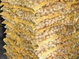 Картофель из Беларуси / Krompir iz Belorusije - фото 1