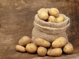 Картофель сорт  Королева Анна оптом