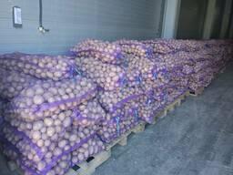Krompir iz Belorusije плодоовощная продукция - photo 7