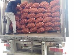 Купи кромпир на велико Казахстан