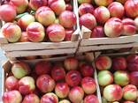 Нектарин, персик, косточковые Сербия-оптом!!! - фото 3