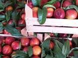 Нектарин, персик, косточковые Сербия-оптом!!! - фото 4