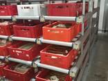 Оборудование для мясопереработки, гигиена и санитария - фото 5