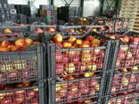 Персик нектарин Греция - фото 3