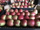 Продам польские яблоки - фото 2