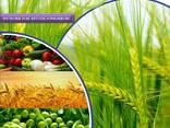 Произвођач и добављач пестицида широм света - фото 2