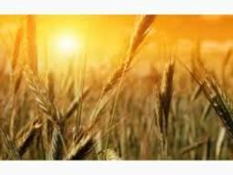 Пшеница кукуруза ячмень масло FOB – порт Одесса