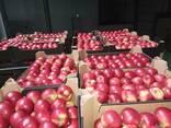 Яблоки польские - фото 2