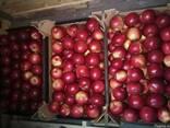Яблоки и груши из Польши - фото 4