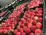 Яблоки из Польши - фото 3