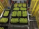 Яблоки из Польши! Apples from Poland! - фото 8