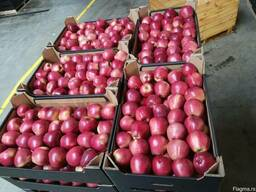 Яблоки польские - фото 3