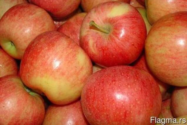 Яблоко сорт ГАЛА Македония
